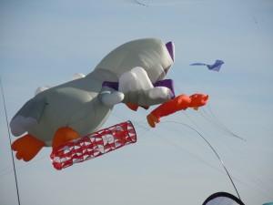 und Paulinchen kann doch noch fliegen. Sie hat nix verlernt!
